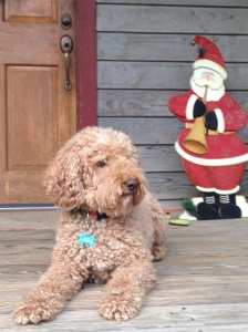 Dash and Santa